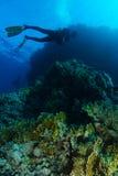 Nadada do mergulhador de mergulhador sobre os corais do fogo no recife dos tubarões Fotografia de Stock Royalty Free