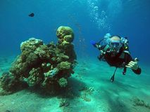 Nadada do mergulhador sob a água imagens de stock royalty free