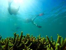 Nadada sobre corales Imagenes de archivo