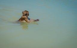 Nadada y juego salvajes locales Hua Hin Beach de los monos Imagen de archivo libre de regalías
