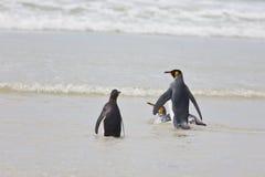 Nadadas de los pingüinos Fotos de archivo