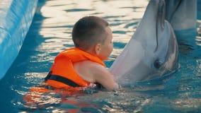 Nadadas del muchacho con los delfínes almacen de video