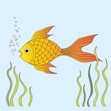 Nadadas do peixe dourado na água no aquário Algas em torno dele Ilustra??o do vetor ilustração royalty free