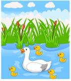 Nadadas dos desenhos animados do pato com seus quatro patinhos bonitos pequenos no rio ilustração royalty free