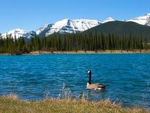 Nadador da montanha Imagem de Stock