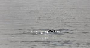 Nadador durante invierno en el mar Mediterráneo Fotografía de archivo libre de regalías