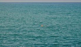 Nadador en el mar Imagen de archivo libre de regalías
