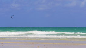 Nadadores de la playa de Miami del día de verano y jinete del sur 4k los E.E.U.U. de la cometa metrajes