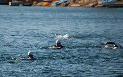 Nadadores de Triathalon Foto de archivo libre de regalías