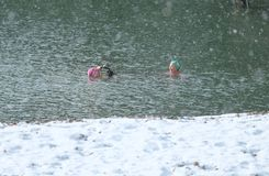 Nadadores do inverno em Brighton Beach em fevereiro de 2018 Fotografia de Stock