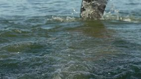Nadadores dos atletas que mudam a disciplina da raça da natação a biking no movimento lento do rio video estoque