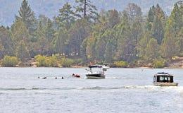 Nadadores en el agua Fotografía de archivo libre de regalías