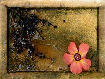 nadal jesień życia Zdjęcie Royalty Free
