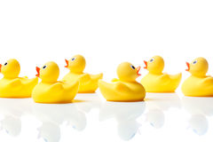 Nadando contra la corriente, patos de goma en blanco Imagen de archivo