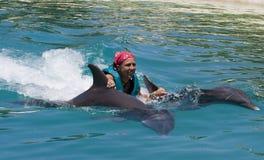 Nadar com os golfinhos Fotos de Stock