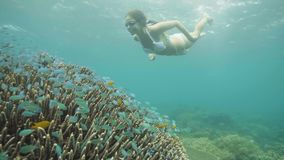 Nadar da moça subaquático nos óculos de proteção e peixes e recife de corais de observação no mar Mulher que mergulha no oceano e video estoque