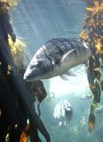 Nadar sobre perto Fotos de Stock
