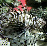 Nadar sobre perto Imagem de Stock Royalty Free