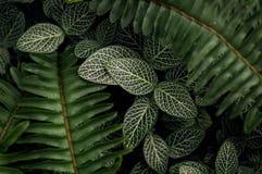 Nadaremny rośliny i paproci przygotowania w miękkim świetle zdjęcie royalty free