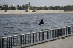 Nadbrzeże rzeki Ahmadabad zdjęcia royalty free