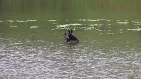 Nadbrzeże rzeki regionalności park - dwa pięknego jeziora dla łowić, kayaking, kajakujący i stoi up paddling zbiory wideo