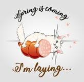 nadchodzącej wiosny ` kłaść słodkie kota Zdjęcia Royalty Free