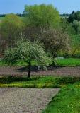 nadchodząca wiosna Zdjęcie Stock