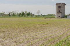 nadchodzące nowe plantacje Zdjęcia Stock