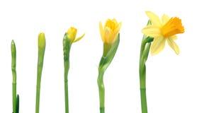 nadchodzącej wiosny Zdjęcia Royalty Free