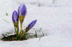 nadchodzącej wiosny obraz stock