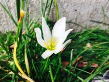 nadchodzącej wiosny Obrazy Royalty Free