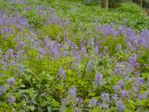 nadchodzącej wiosny Fotografia Stock