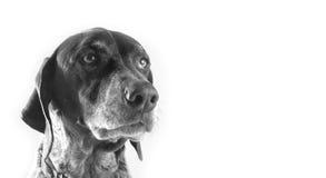 Nadelanzeige-Vogel-Hund stockfotografie