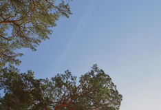 Nadelbaumlandschafts-Kiefernnadelfrühlingswindsonnenkiefern-Herbstniederlassungen bewölken Laubbaum-Wald-summe der Niederlassungs Stockbild