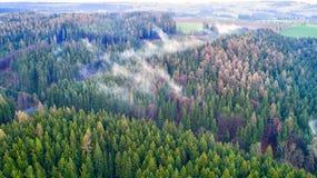 Nadelbaumwald mit Lügennebel Lizenzfreies Stockfoto