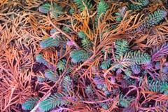 Nadeln von verschiedenen Farben auf der Erde Stockfotos