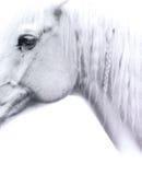 Nadenkend paard royalty-vrije stock foto