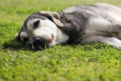 Nadenkende hond, nadenkende hond en natuurlijke achtergrond Stock Fotografie