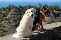 Nadenkende honden dichtbij het overzees Stock Afbeelding