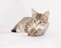 Nadenkende kat Stock Foto