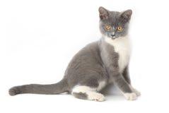 Nadenkende kat Stock Foto's