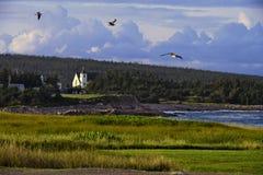 Nadmorski Seagull Obraz Royalty Free