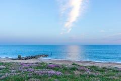Nadmorski widok krystaliczny błękitne wody morze, piaskowata plaża, groyne falochron i fiołkowa roślina przy błękitną godziną pod fotografia stock