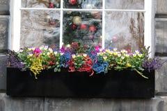 Nadokienni parapetów kwiaty fotografia royalty free