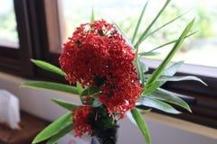 Nadruk op de rode bloem stock afbeelding