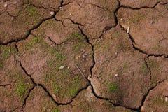 Nadruk op droge grond over een bergmeer in Dolomiet Italië Stock Fotografie