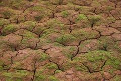 Nadruk op droge grond over een bergmeer in Dolomiet Italië Stock Afbeelding