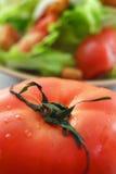 Nadruk op tomaat met saladeachtergrond Royalty-vrije Stock Fotografie