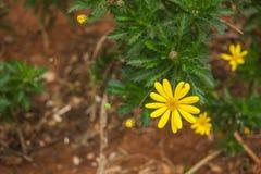 Nadruk op weinig gele bloem Stock Foto's
