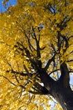 nadrzewny jesienny zdjęcia stock